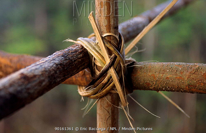 Detail of the house's rattan assemblage, Western Papuasia, Indonesia 1999, 2000 (West Papua)  -  Eric Baccega/ npl
