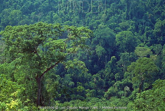 Upland or Terra firme of the Amazon rainforest, Serra dos Carajas, Para, N Brazil  -  Luiz Claudio Marigo/ npl