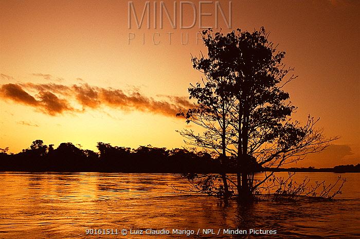 Lake Mamiraua at sunset, Mamiraua Ecol Stn, Amazonas, Brazil  -  Luiz Claudio Marigo/ npl