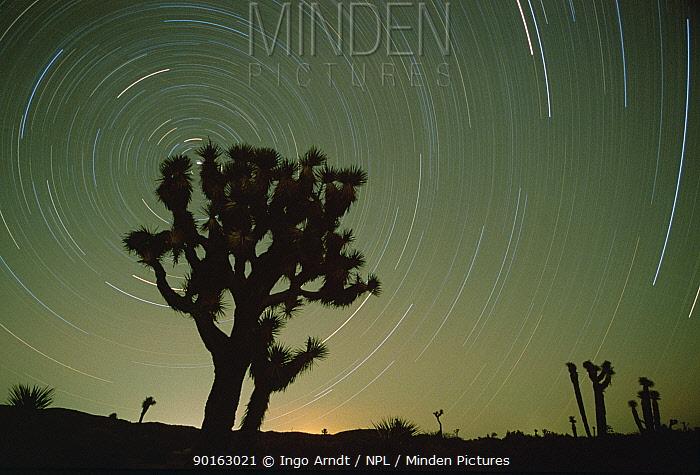Star trails in night sky Joshua Tree NP, California, USA  -  Ingo Arndt/ npl