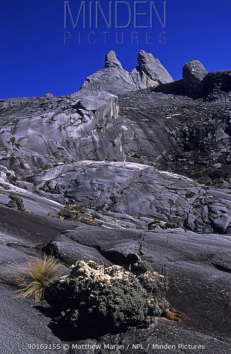 Mount Kinabalu, Mount Kinabalu National Park, Sabah, Malaysia  -  Matthew Maran/ npl