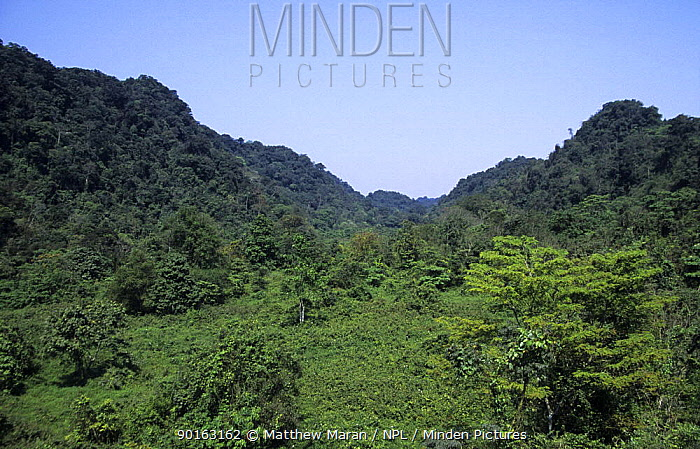 Cuc Phuong National Park, View of secondary rain forest from observation tower, Vietnam  -  Matthew Maran/ npl