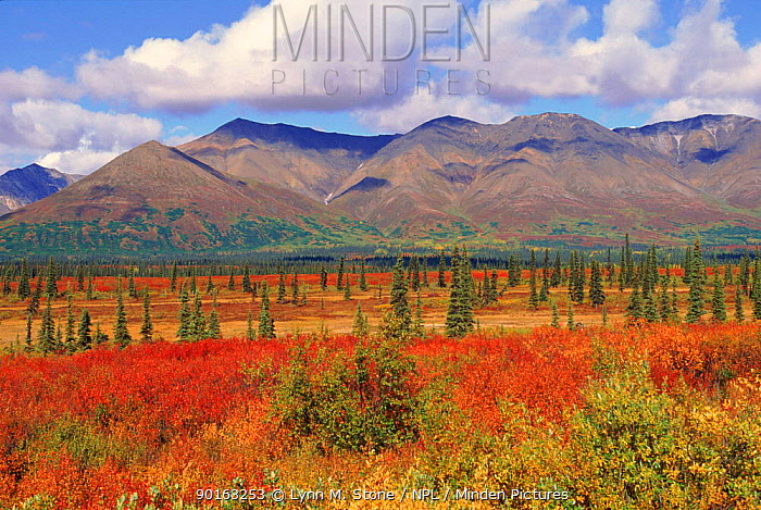 Tundra landscape in autumn Denali NP, Alaska USA  -  Lynn M. Stone/ npl