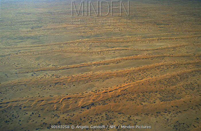 Aerial view of dunes in Strzelecki Desert, South Australia  -  Angelo Gandolfi/ npl