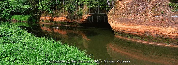 Red sandstone cliffs on banks of River Svetupe, near Lauvas, Latvia  -  Niall Benvie/ npl