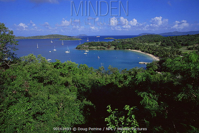 Caneel bay, St John, US Virgin Islands, Caribbean  -  Doug Perrine/ npl
