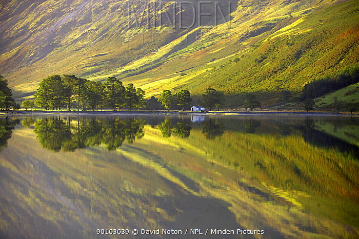 Reflections on the shore of Buttermere at dawn, Cumbria, Lake District, Cumbria, England, UK  -  David Noton/ npl