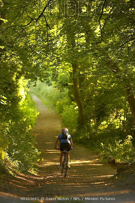 Woman on mountain bike cycling down leafy country lane nr Child Okeford, Dorset, England, UK  -  David Noton/ npl
