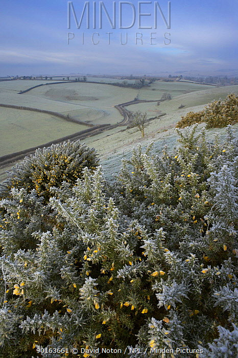 Frost on a winter morning, Poyntington, nr Sherborne, Dorset, England, UK  -  David Noton/ npl