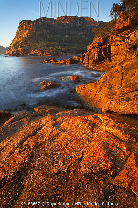 Dawn at Sleepy Bay, Freycinet Peninsula, Freycinet National Park, east coast, Tasmania, Australia  -  David Noton/ npl