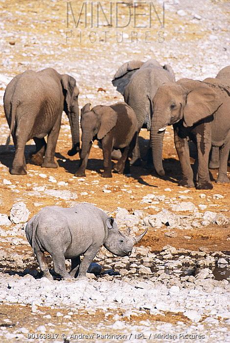 Black rhino (Diceros bicornis) and African elephants (Loxodonta africana)at waterhole Etosha, Namibia  -  Andrew Parkinson/ npl