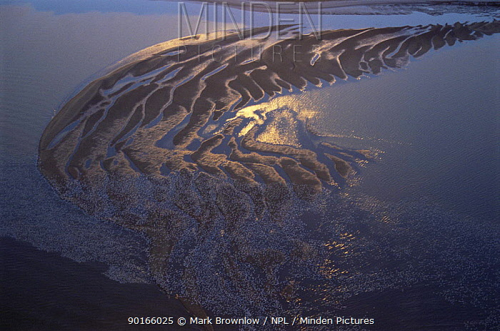 Aerial view of Bombay Hook NWR, Delaware Bay, Delaware, USA Salt marsh and refuge for migratory flocks of Greater snow geese  -  Mark Brownlow/ npl