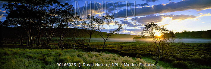 Dawn at Polblue Marsh, Barrington Tops National Park, New South Wales, Australia  -  David Noton/ npl