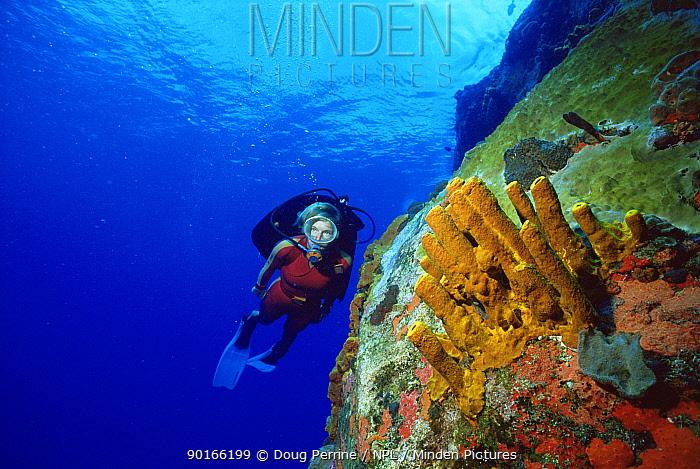 Diver at Diamond Rock, Saba, Caribbean Volcanic basalt rocks are encrusted with sponges  -  Doug Perrine/ npl