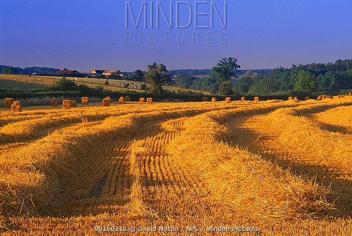 Stubble field, near Sherborne, Dorset, England, UK  -  David Noton/ npl