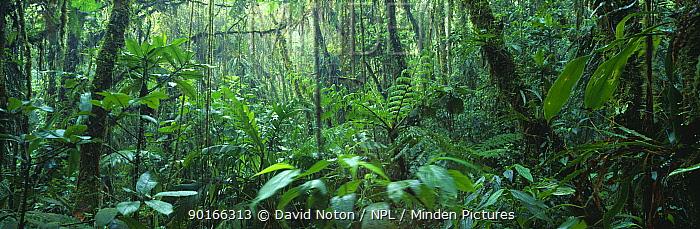 Tropical cloudforest, Santa Elena Reserve, Costa Rica  -  David Noton/ npl