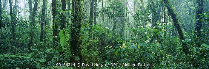 Rainforest, tropical cloud forest, Santa Elena Cloud Forest Reserve, Costa Rica  -  David Noton/ npl