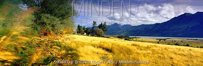 Farmland in Glenorchy, South Island, New Zealand  -  David Noton/ npl