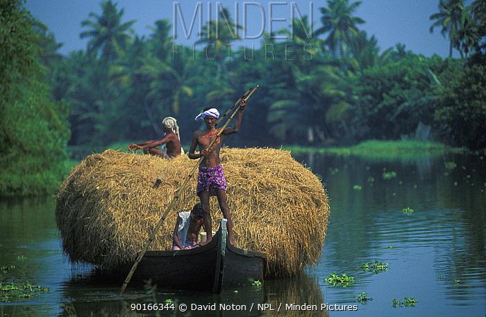 Men bringing in the hay crop, the backwaters, Kerala, India  -  David Noton/ npl