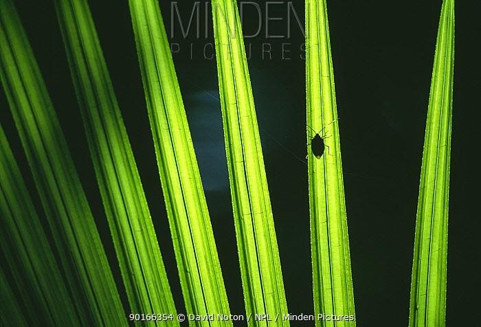 Rainforest leaves with beetle, Daintree National Park, Queensland, Australia  -  David Noton/ npl