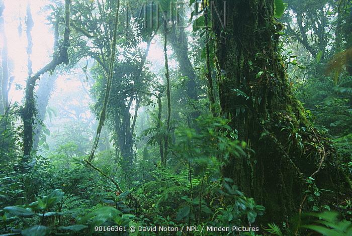 Tropical cloudforest, Monteverde Biological Reserve, Costa Rica  -  David Noton/ npl