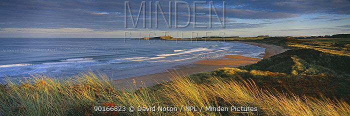 Dunstanburgh Castle and Embleton Beach at dusk, Northumbria, England, UK  -  David Noton/ npl