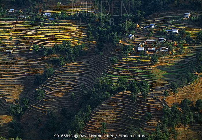 Aerial view of terraced fields at Kalikastan, nr Pokhara, Nepal  -  David Noton/ npl