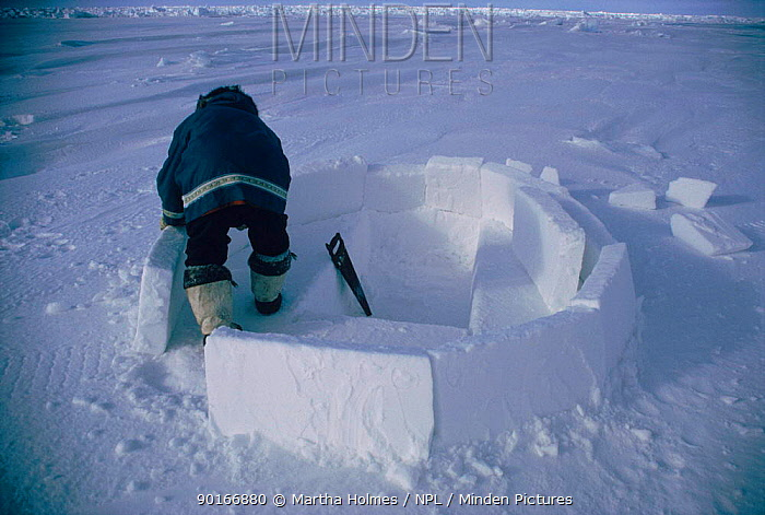 Inuit building igloo on sea ice, sequence Admiralty inlet Canada  -  Martha Holmes/ npl