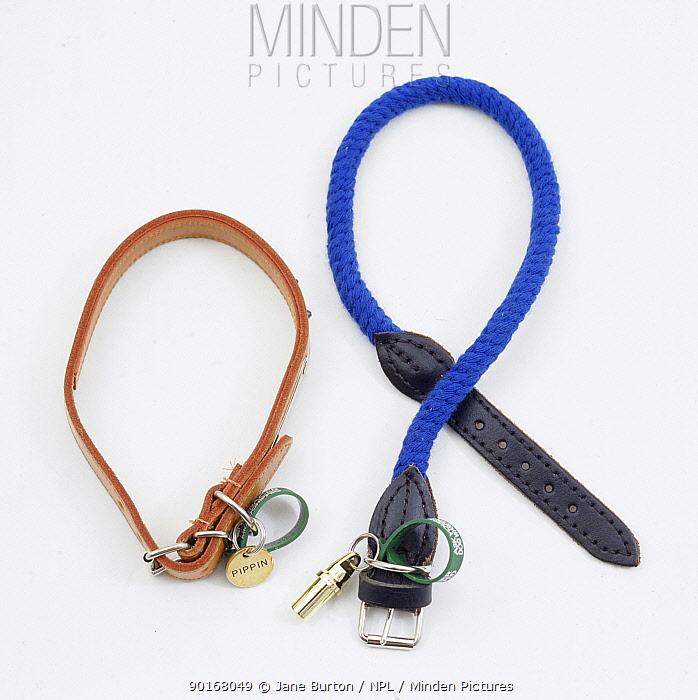 Leather and plaited rope dog collars  -  Jane Burton/ npl