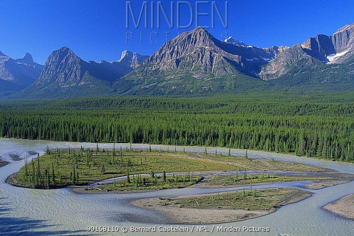 Looking down onto meandering Athabasca River, Jasper NP, Canada  -  Bernard Castelein/ npl