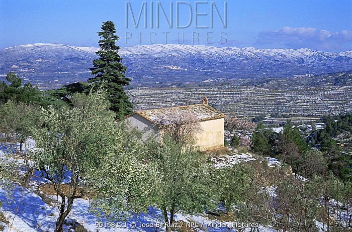 Mountain chapel and Olive grove in snow, Alicante, Spain  -  Jose B. Ruiz/ npl