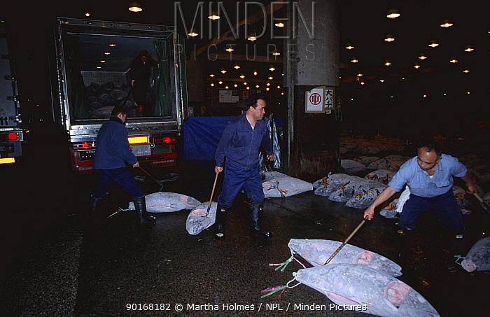 Unloading Frozen Blue fin tuna at Tsukiji fish market, Tokyo, Japan  -  Martha Holmes/ npl