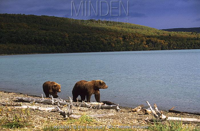Grizzly bear (Ursus arctos horribilis) mother and cub, Naknek Lake, Katmai National Park, Alaska, USA  -  Eric Baccega/ npl