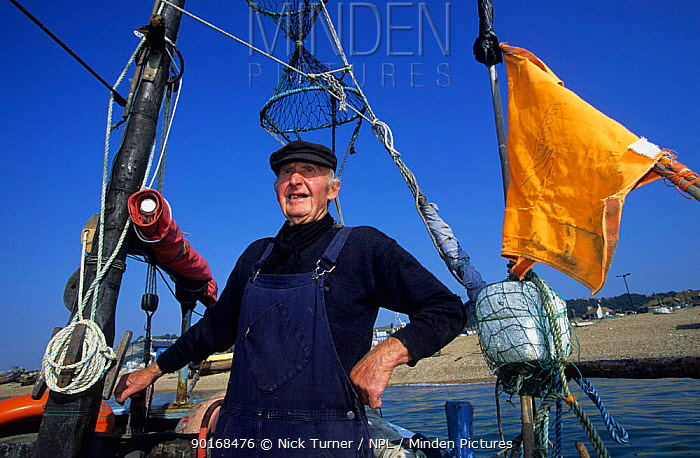 Fisherman working at a fishery on the English Channel, Hastings, UK  -  Nick Turner/ npl