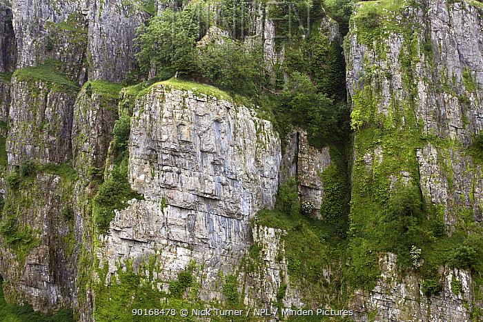 Limestone cliffs, Cheddar Gorge, Cheddar, Somerset, England  -  Nick Turner/ npl