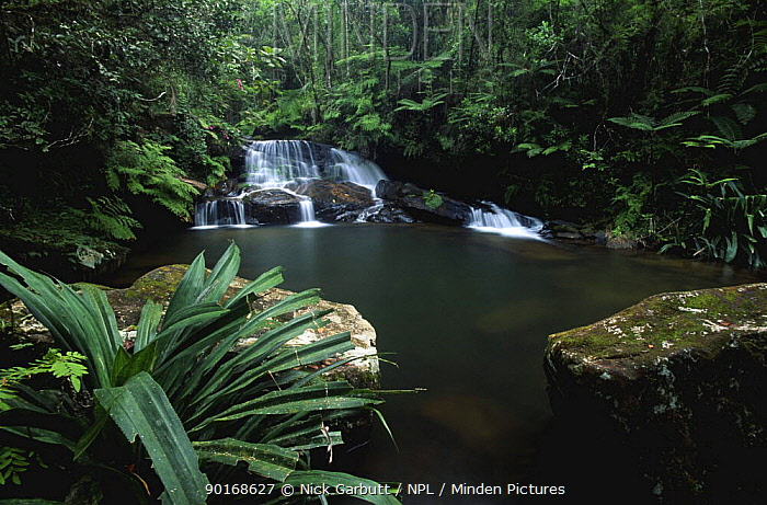 Waterfall and pool in rainforest stream, Mantadia NP, E Madagasca  -  Nick Garbutt/ npl
