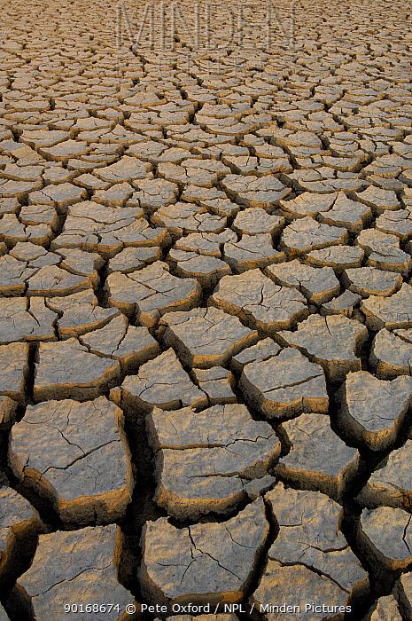 Dry cracked mud on the salt flats of the Little Rann of Kutch, Gujarat, India, 2006  -  Pete Oxford/ npl