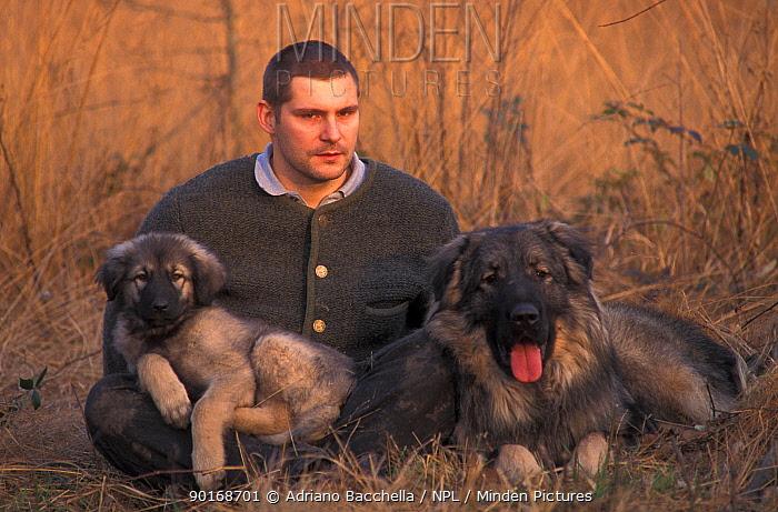 Domestic dogs, Estrela Mountain Dogs with owner  -  Adriano Bacchella/ npl
