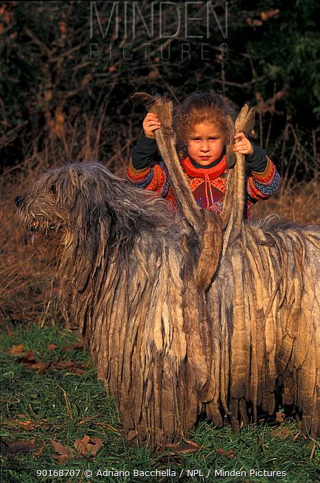 Girl standing holding up 'flocks' of domestic dog, Bergamasco  -  Adriano Bacchella/ npl