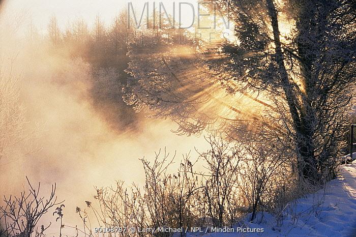 Sunrise on winter misty morning over Winter Creek, Wisconsin, USA  -  Larry Michael/ npl