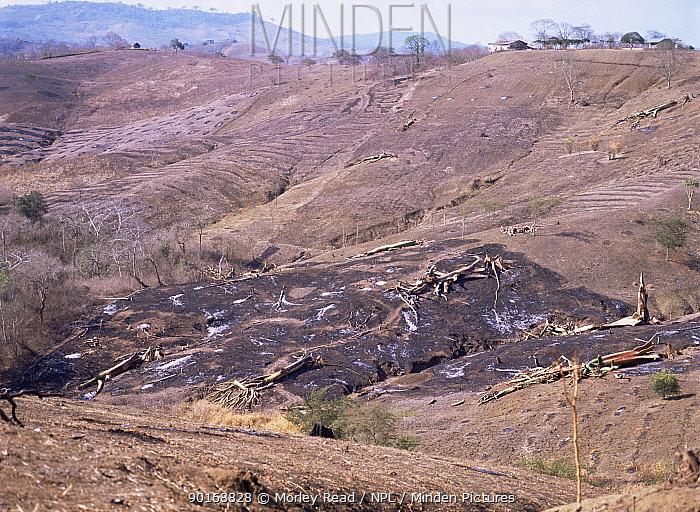 Severe deforestation along coast, near Manabi, Ecuador  -  Morley Read/ npl