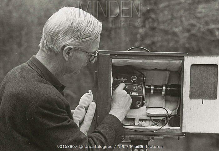 Film-maker Eric Ashby adjusts camera in special box to reduce noise of whirring film camera, 1958 For filming badgers and foxes  -  Chris Parsons/ npl
