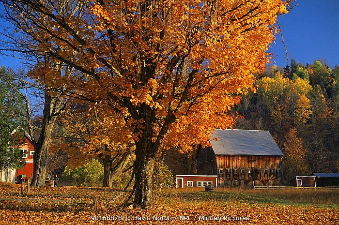 Autumn colours in Orange County, Vermont, USA  -  David Noton/ npl