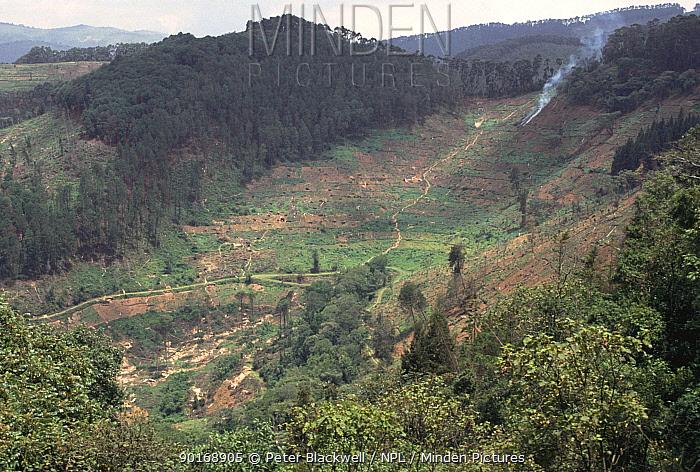 Visible deforestation in Bwindi NP reserve, Uganda, East Africa  -  Peter Blackwell/ npl