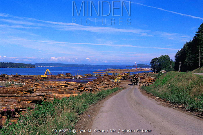 Coastal Sawmill industry, Vancouver Island, British Columbia, Canada  -  Lynn M. Stone/ npl