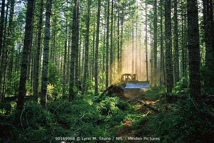 Logging in Suislaw National Forest, Oregon, USA  -  Lynn M. Stone/ npl