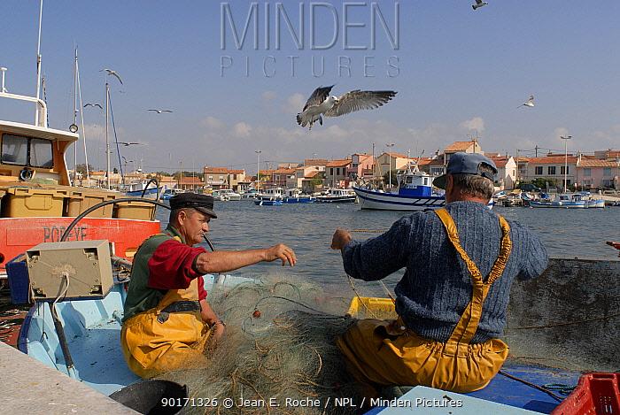 Fishermen checking net, port of Carro, Blue coast, Provence, France  -  Jean E. Roche/ npl