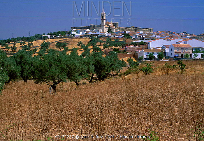 Village landscape with castle Cumbres Mayores Huelva Spain  -  Jose B. Ruiz/ npl