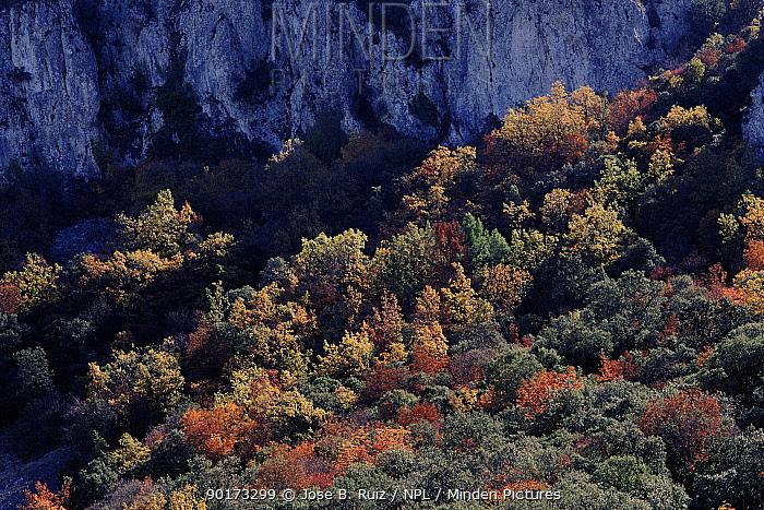 Mediterranean forest in autumn Font Roja NP, Alicante, Spain, Europe  -  Jose B. Ruiz/ npl