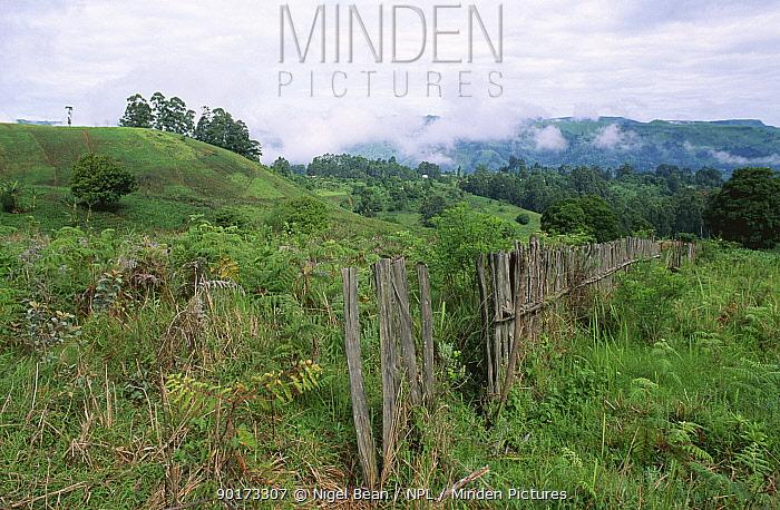 Fields bordering temperate rainforest of Mount Kilum, Cameroon, West Africa  -  Nigel Bean/ npl